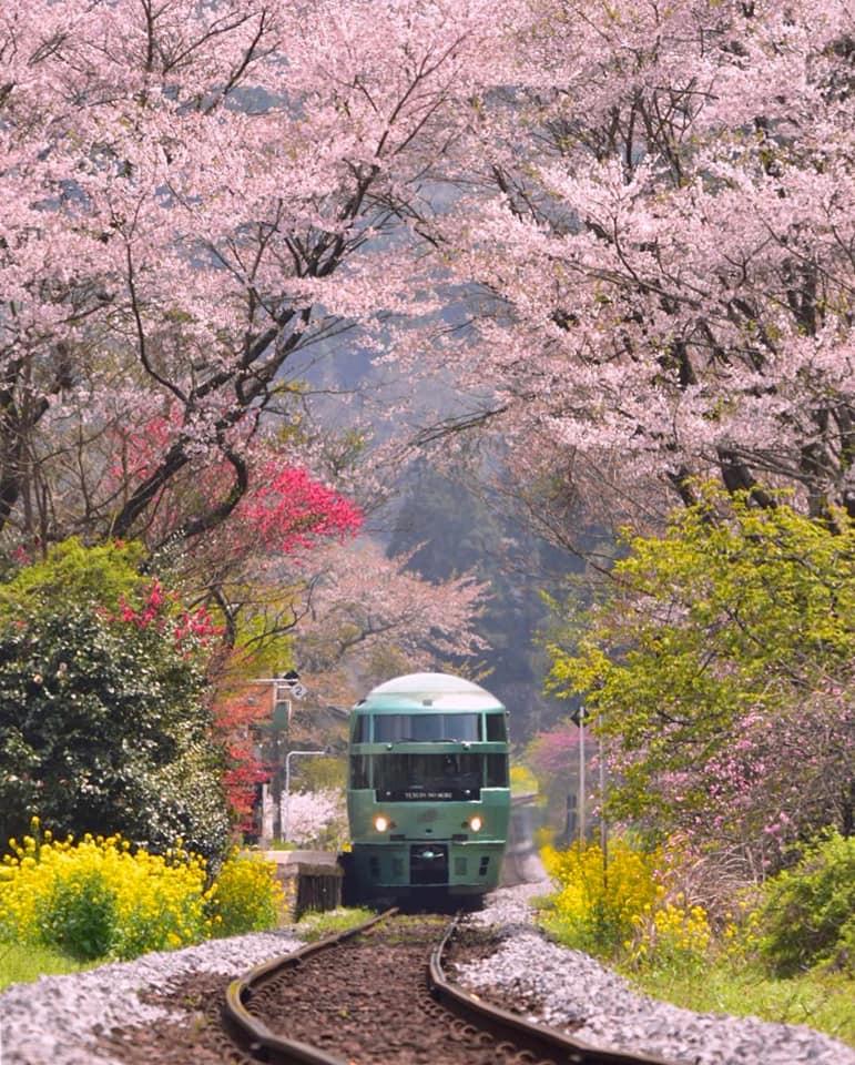 biểu tượng đặc trưng của đất nước Nhật Bản